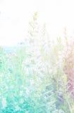 Härlig blomma med färgfilter arkivfoto