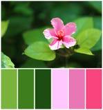Härlig blomma med gröna sidor, closeup Naturlig färgpalett för inre- eller modedesign fotografering för bildbyråer