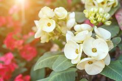 Härlig blomma- och gräsplanbladbakgrund i trädgård på solig sommar eller vårdagen Royaltyfri Bild