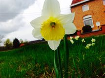 Härlig blomma- och gräsplannaturbakgrund Arkivfoto