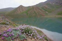 Härlig blomma och sjö av den nordliga Pamirsen Arkivfoto