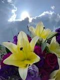 härlig blomma på blå himmel Royaltyfri Fotografi