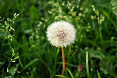 Härlig blomma på en härlig bakgrund Arkivfoto