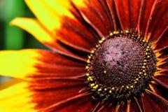 Härlig blomma på Frederik Meijer Gardens arkivbild