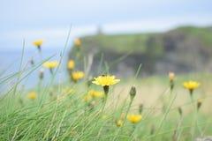 Härlig blomma på kanten av en klippa Arkivfoton