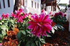 Härlig blomma på Lanna Resort Arkivfoto