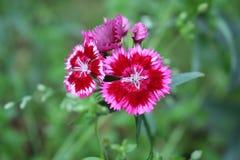Härlig blomma på naturlig bakgrund av gräsplan Royaltyfri Fotografi