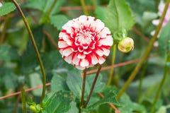 Härlig blomma som blommar i vårdag Royaltyfri Fotografi