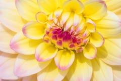 Härlig blomma som blommar i vårdag Fotografering för Bildbyråer