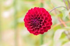 Härlig blomma som blommar i vårdag Royaltyfria Foton