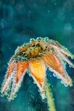 Härlig blomma under vatten med bubblor Fotografering för Bildbyråer