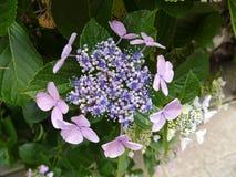 Härlig blomma unknowned namn arkivfoton