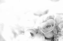 Härlig blommabakgrund/tapet som göras med färgfilter Arkivfoto