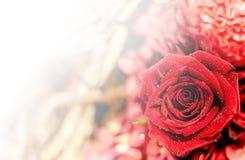 Härlig blommabakgrund/tapet som göras med färgfilter Royaltyfri Fotografi