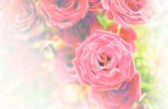 Härlig blommabakgrund/tapet som göras med färgfilter Royaltyfri Foto