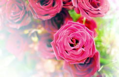 Härlig blommabakgrund/tapet som göras med färgfilter Royaltyfri Bild