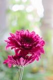 Härlig blommablom Fotografering för Bildbyråer
