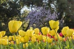 Härlig blommablomning på den Descanso trädgården Royaltyfri Bild