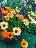 Härlig blommabonsai royaltyfria foton