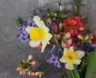 härlig blommafjäder Arkivbild