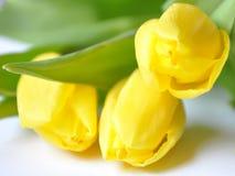 härlig blommafjäder Royaltyfri Fotografi