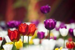 härlig blommafjäder Arkivfoto