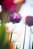 härlig blommafjäder Royaltyfria Foton