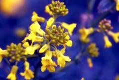 härlig blommafjäder Arkivbilder