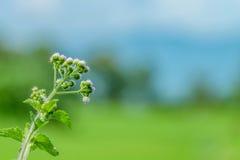 härlig blommafjäder Fotografering för Bildbyråer