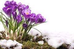 härlig blommafjäder för konst Arkivbilder