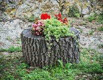 Härlig blommagarnering på trädstubben Arkivbild
