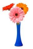 härlig blommagerber fotografering för bildbyråer
