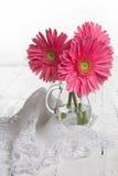 härlig blommagerbera Arkivfoton