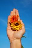 härlig blommahandbild Arkivfoton