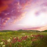 härlig blommaliggande arkivbilder