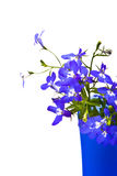 härlig blommalobelia arkivfoton