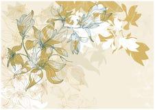 härlig blommamagmilia Arkivbilder