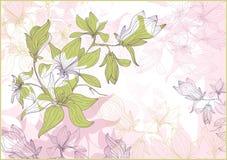 härlig blommamagmilia Royaltyfria Foton