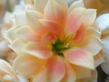 Härlig blommamakro fotografering för bildbyråer