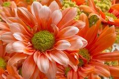 Härlig blommanärbild Arkivfoton