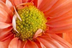 Härlig blommanärbild Royaltyfria Bilder