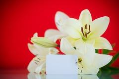 Härlig blommande lilja Fotografering för Bildbyråer