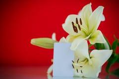Härlig blommande lilja Arkivfoto
