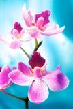 härlig blommaorchid Arkivbild