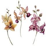 härlig blommaorchid royaltyfri illustrationer