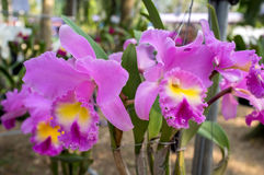 härlig blommaorchid arkivfoton