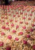 Härlig blommaordning i `-blomman för fader`-aktivitet för att att vara medvetent av hans majestätkonung Bhumibol Adulyadej på Pak Arkivfoton