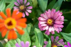 härlig blommapink Arkivfoto