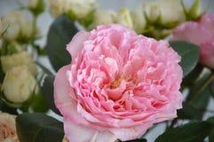 härlig blommapink arkivbild