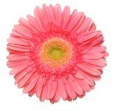 härlig blommapink för D f Fotografering för Bildbyråer